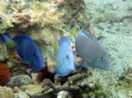 Fish in St Thomas - March 2012