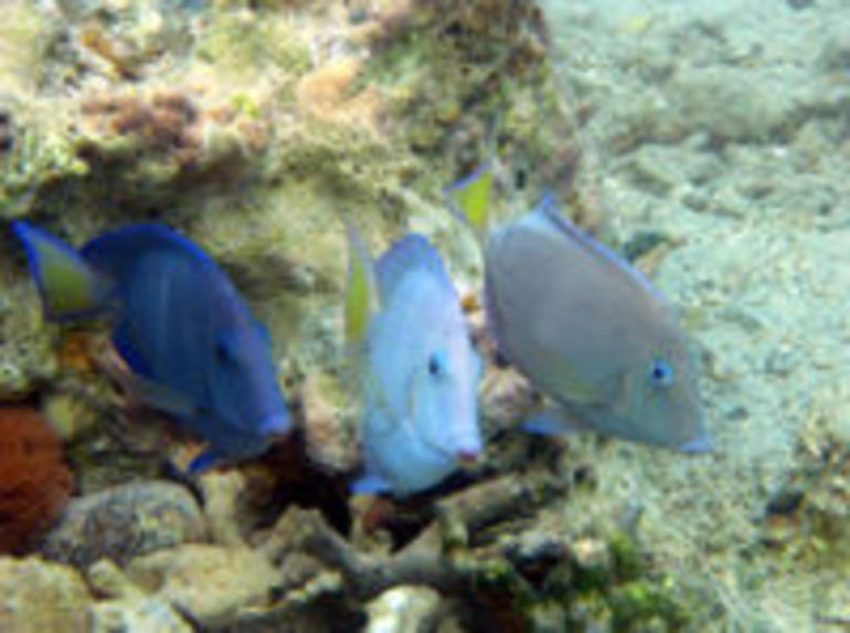 Fish in St Thomas - St Thomas