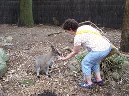 I was thrilled to be able to hand-feed a kangaroo. , Caesarqueen - May 2014