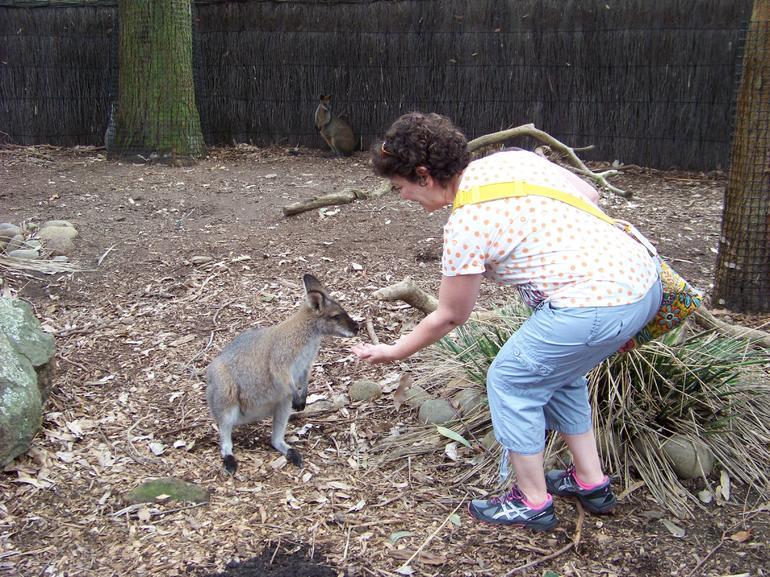 Hand feeding time! - Sydney