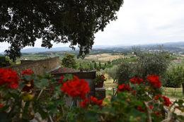 Tuscan winery , bartmassey1 - July 2016