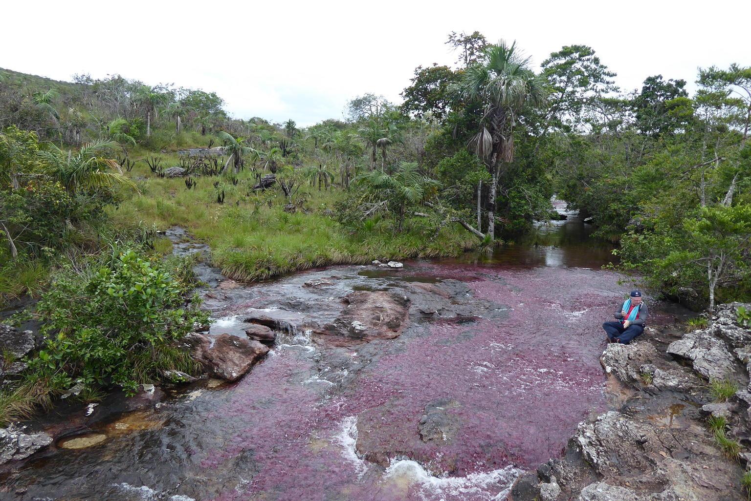 MÁS FOTOS, 3-Day Caño Cristales (Rainbow River) from Bogotá