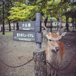 Nara Park , Elisha P - November 2015