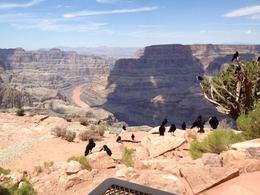 Frokost (med i prisen) med direkte udsigt til Grand Canyon, så man ved, hvad der venter på helikopter og sejltur. , Jan S - August 2013