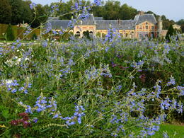 Because I am a passionate gardener, I focused on the plantings at the two chateaus. The building in the background of this photo is the pretty stables at Vaux le Vicomte, with lovely late summer ... , Gillian A - October 2013