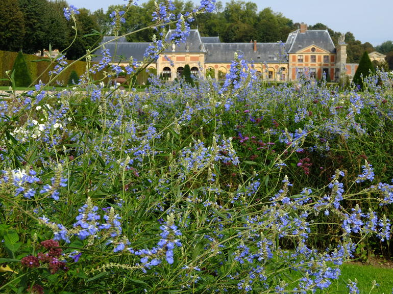 Late summer flowers at Vaux le Vicomte - Paris