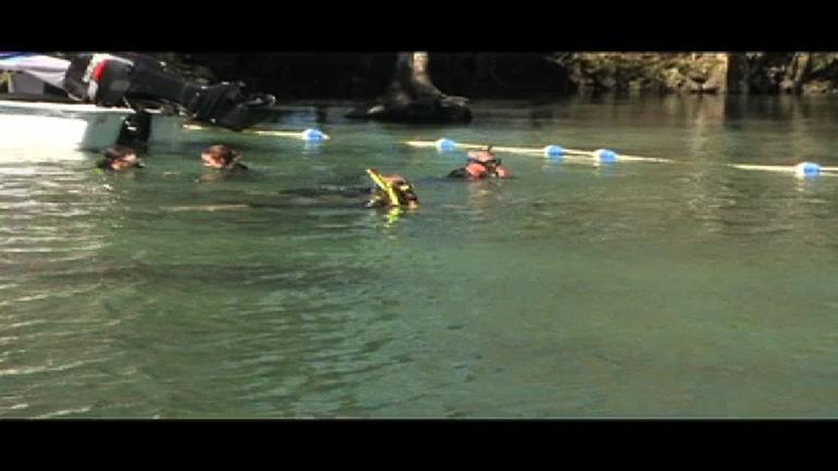 Snorkeling with Manatees, Florida - Orlando