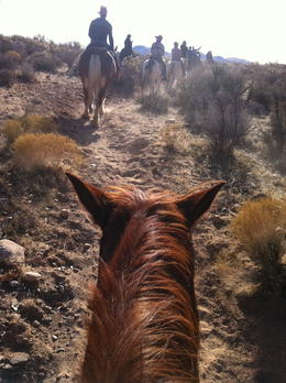 I took this from my horse ( called Edge) - with the rest of the riders ahead of me , ponies4us - December 2011