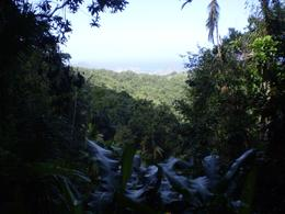 View of rainforest - January 2008