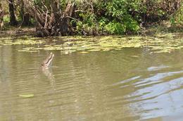 salty croc, KAREN M - October 2009