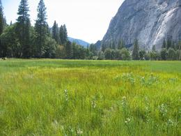 Shot of the Yosemite Valley floor, with a waterfall in the background., Global Nomad - April 2008