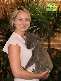 Cute Koala! - April 2016