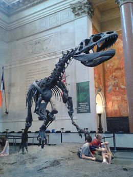 squelette d'un dinosaure. , CHRISTINE J - July 2014