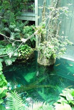 Inside the Rainforest - August 2009
