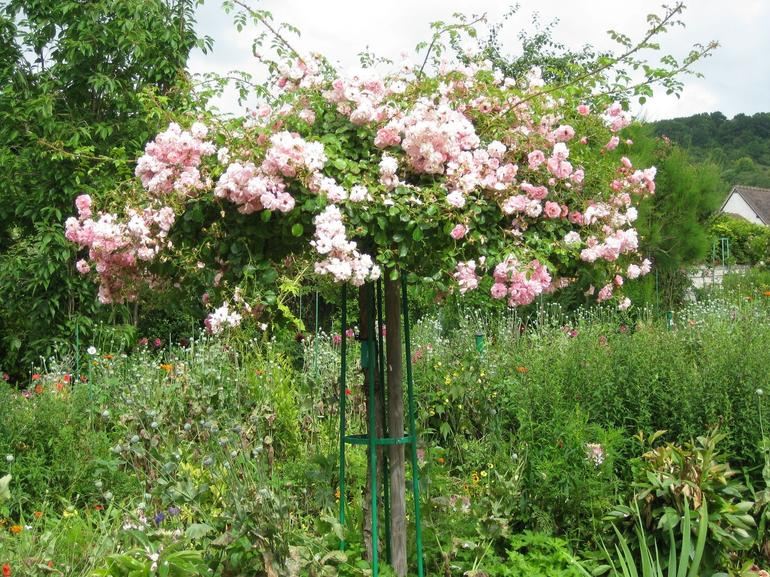 Roses in Giverny - Paris