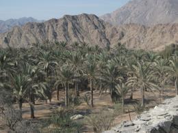 By the old citadel of bithnah, karen c - November 2009