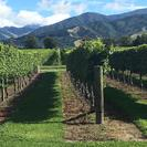 Picton Shore Excursion : Marlborough Wine Tour, Picton, NOVA ZELÂNDIA