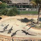 Safari en hidrodeslizador por los Everglades, Miami, FL, ESTADOS UNIDOS