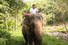 Riding an Elephant in the Jungle. , Wagner V - December 2012