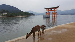 Hiroshima Peace Memorial Park and Miyajima Island Tour from Hiroshima, Caitlin R - November 2016