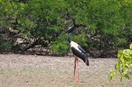 big storks all over!, KAREN M - October 2009