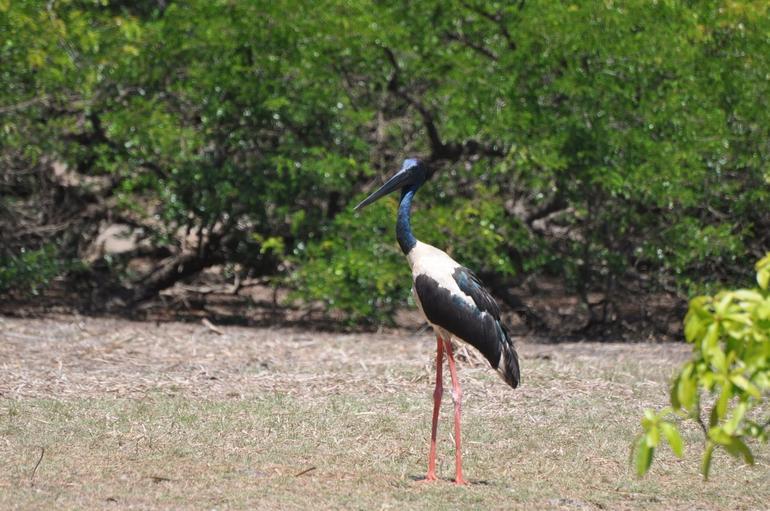Storks - Darwin