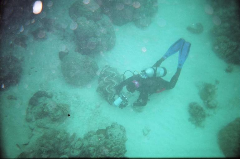 Videographer with Giant Clam - Cairns & the Tropical North