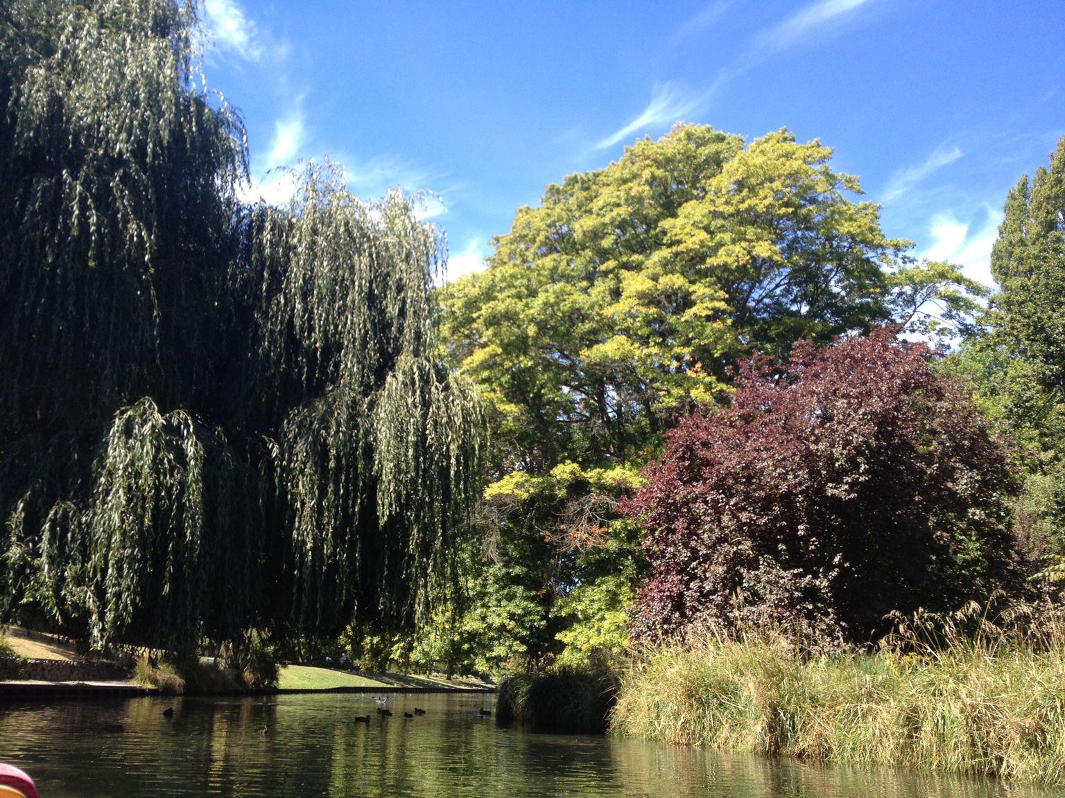 MÁS FOTOS, Con una percha en el río Avon con visita opcional a Christchurch en góndola y excursión por los Jardines Botánicos