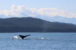 Whale watching in Juneau, Alaska!! , Cynthia A C - July 2016