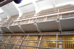 Rows of cells, Sam B! - April 2014