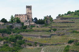 castle view from Rhine , Danielle M - May 2014