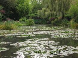 Monet Liley Pads , Peter F - September 2012