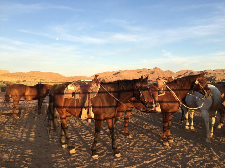 Wild West Sunset Horseback Ride with Dinner from Las Vegas photo 23