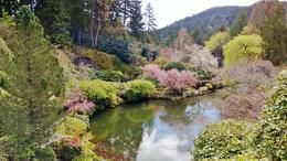 Butchart Gardens , Marcosan - April 2013
