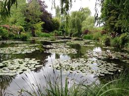 The pond where Monet painted his water lily paintings. Really quite beautiful! , Tobey G - July 2014