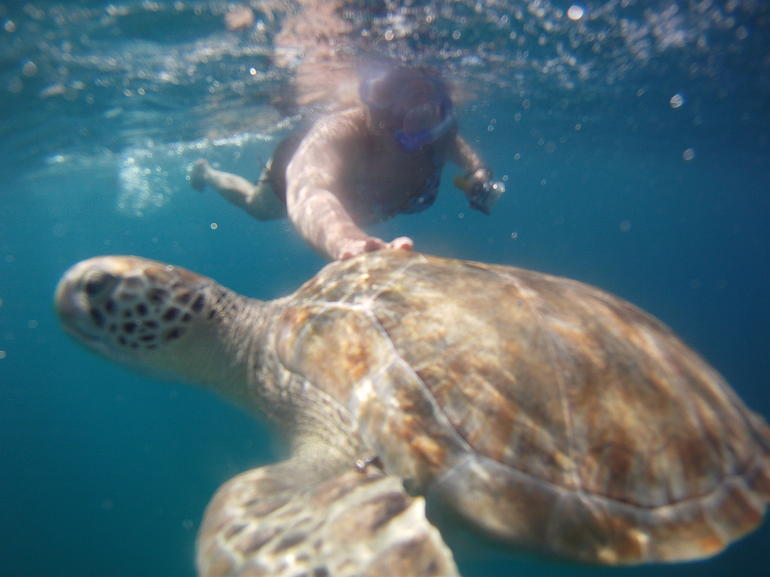 "Barbados ""Shared"" Turtle Swim and Shipwreck Tour photo 15"