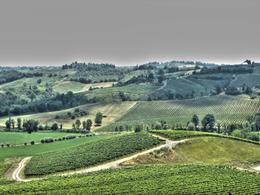 Chianti region , Mitul B - July 2013