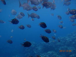 The fish in the coral reef come right to the windows of the semi-sub. , ckfr - December 2012
