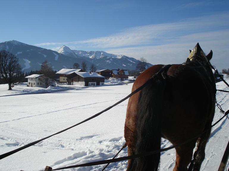 Hard working horses - Salzburg