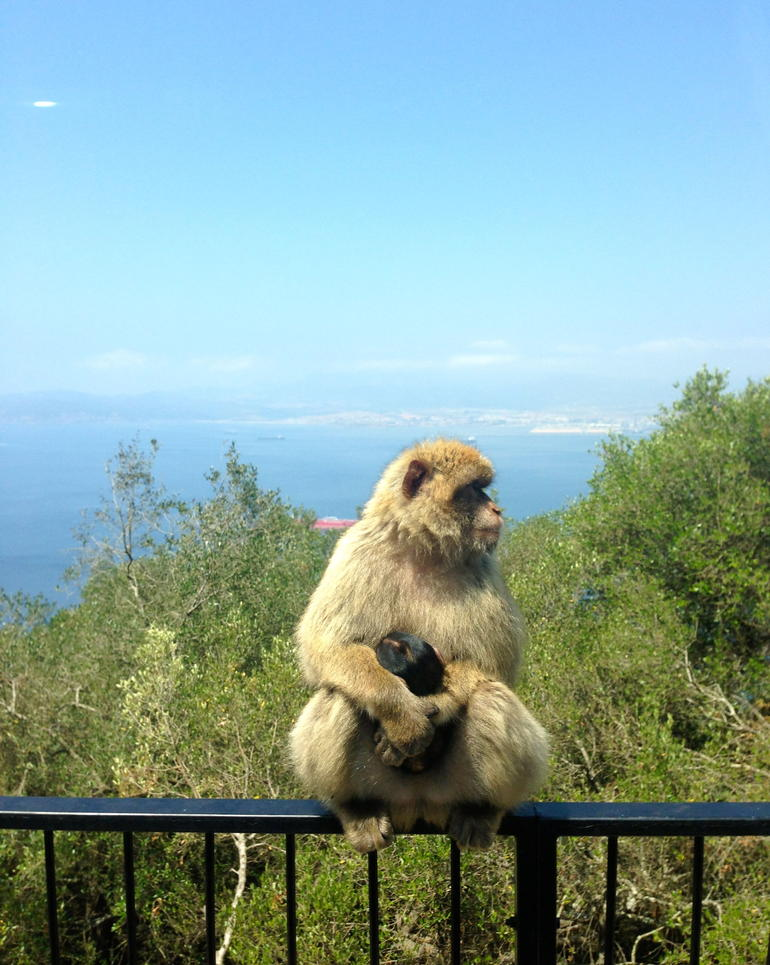 Gibraltar Express - Sightseeing Full Day- From Malaga photo 9