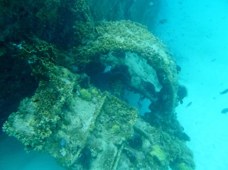 Reef and Shipwreck Snorkeling Tour in Cancun photo 26