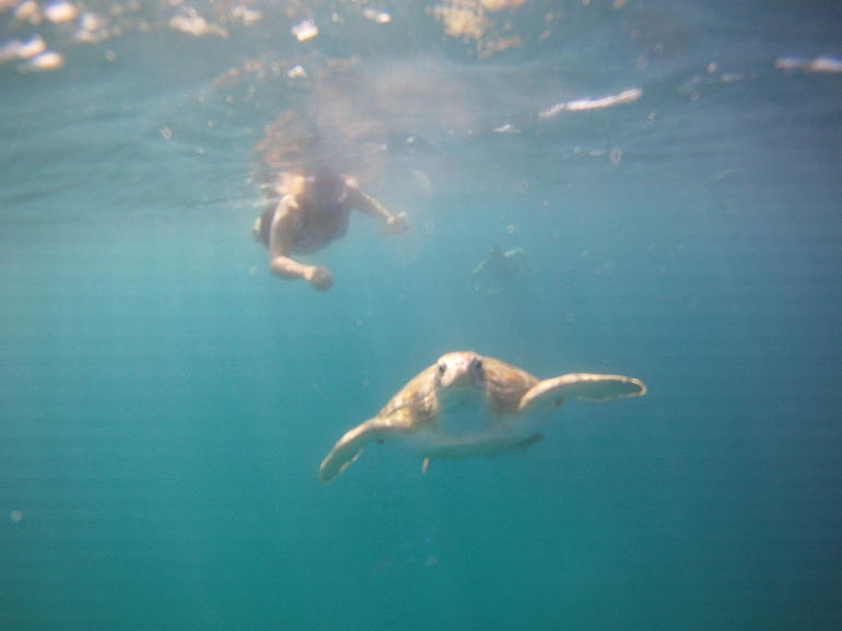 "Barbados ""Shared"" Turtle Swim and Shipwreck Tour photo 14"