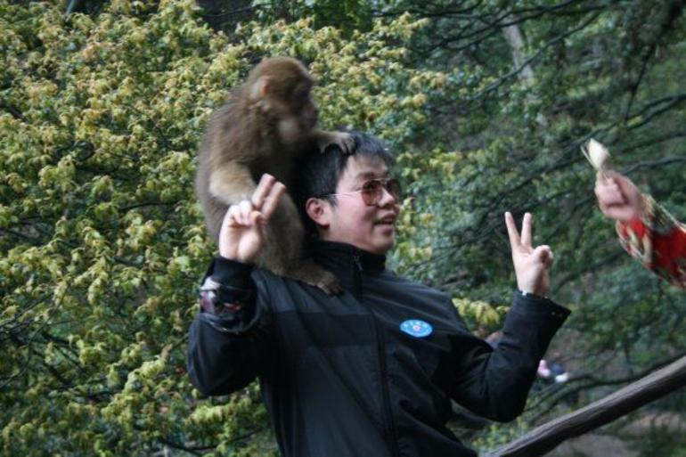 Petting Monkeys - Chengdu