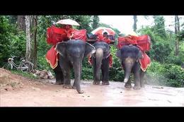Elephants, John Reality - August 2011