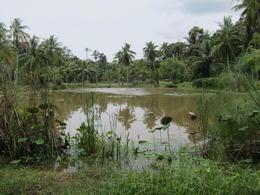 Waterlilly Pond , Yasmine D - March 2013