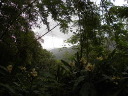 El Yunque Rainforest , Mahsa K - September 2013