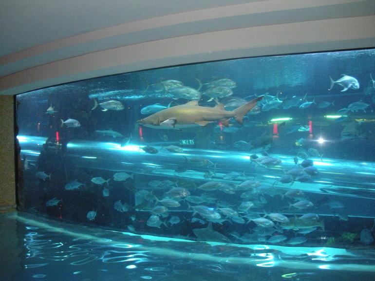 Shark Tank - Las Vegas