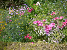 So many pretty flowers!, Laura All Over - August 2014