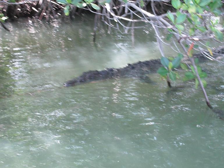 Crocodile - Negril