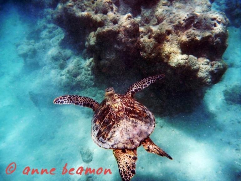 Hanauma Bay Snorkeling Adventure - Oahu